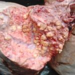 Eating infected meat (4)