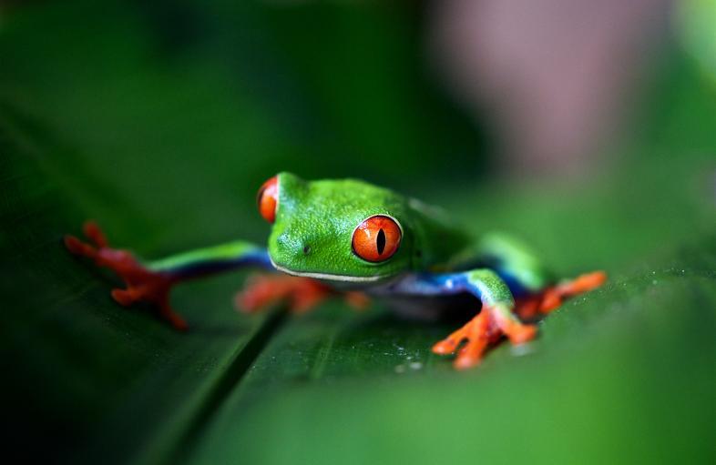 Biodiversity Media Grants