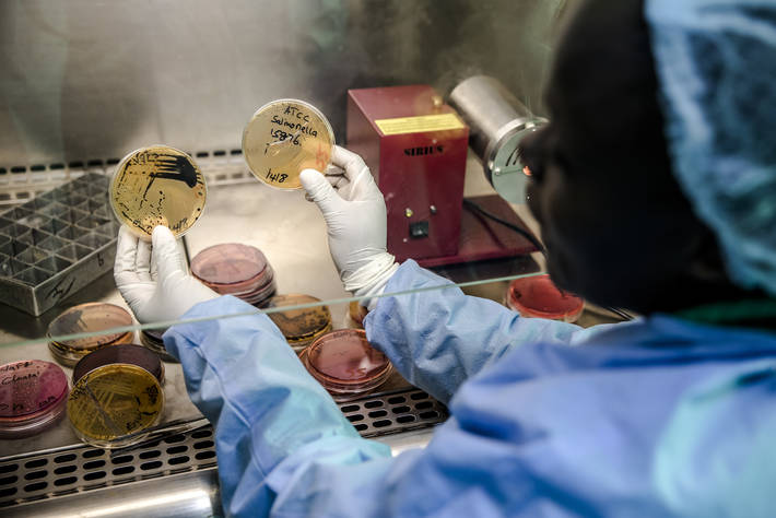 A member of the AMR Surveillance Pilot Study among chicken layering farmers within Kiambu County analyzes samples in a laboratory in Nairobi, Kenya.