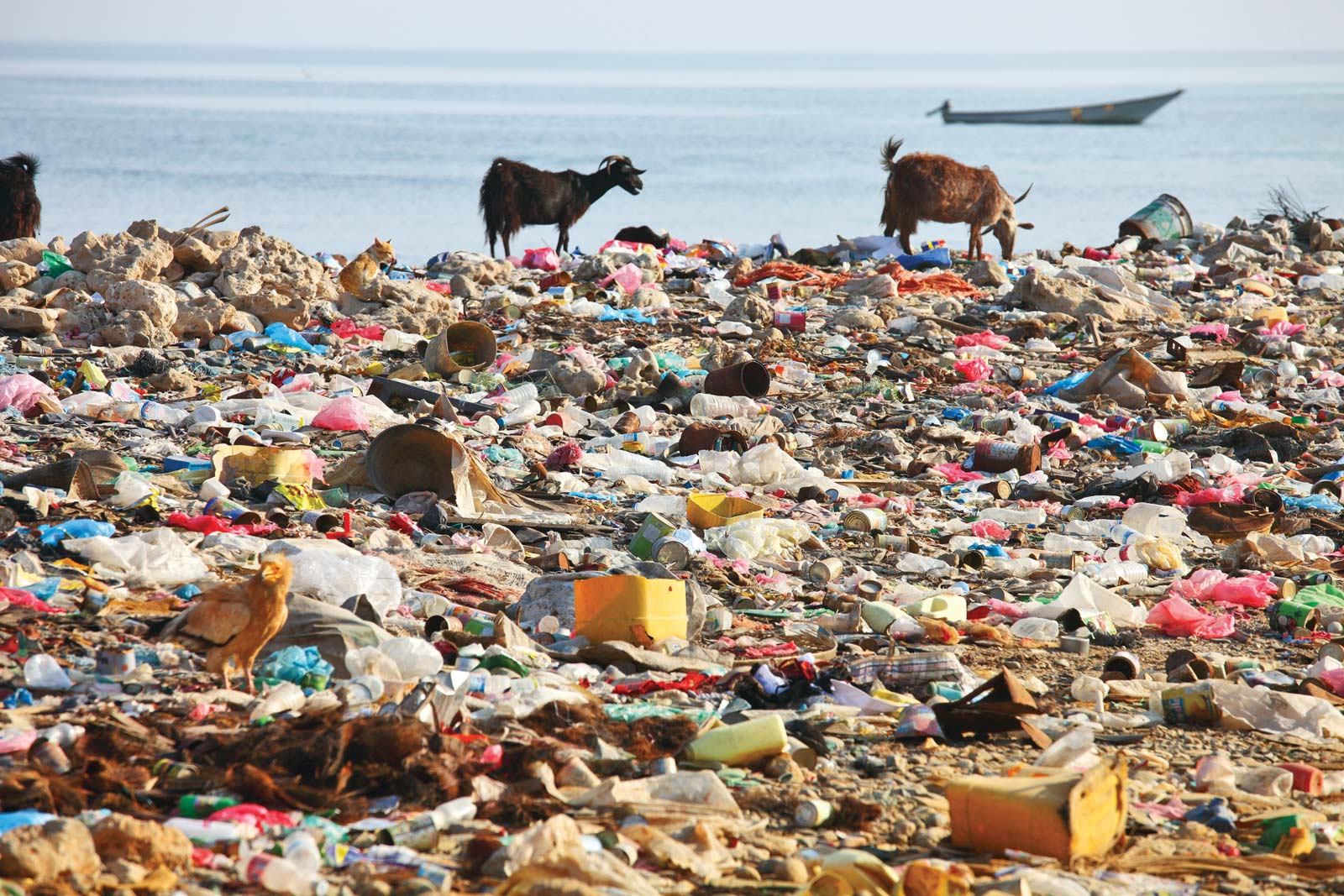 Waste and Plastic pollution with animals scavenging