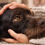 The Impact of Stress on Animal and Human Health