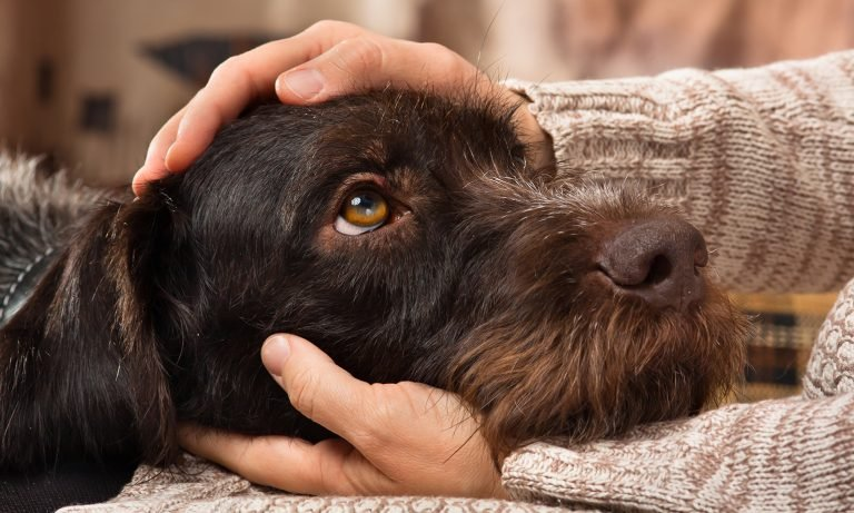 dog-resting-chin-on-persons-hand-768- for stress